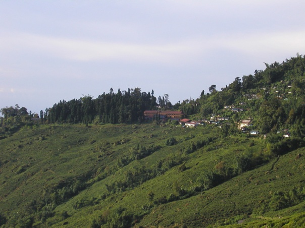 Goomtee Estate in Darjeeling