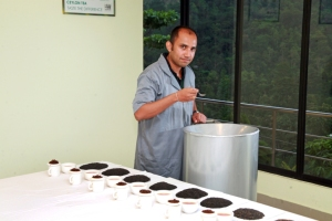 Chaminda Jayawardane doing a tea evaluation