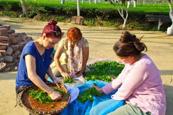 Dolly Lochan (right) processing tea leaves with fellow family members